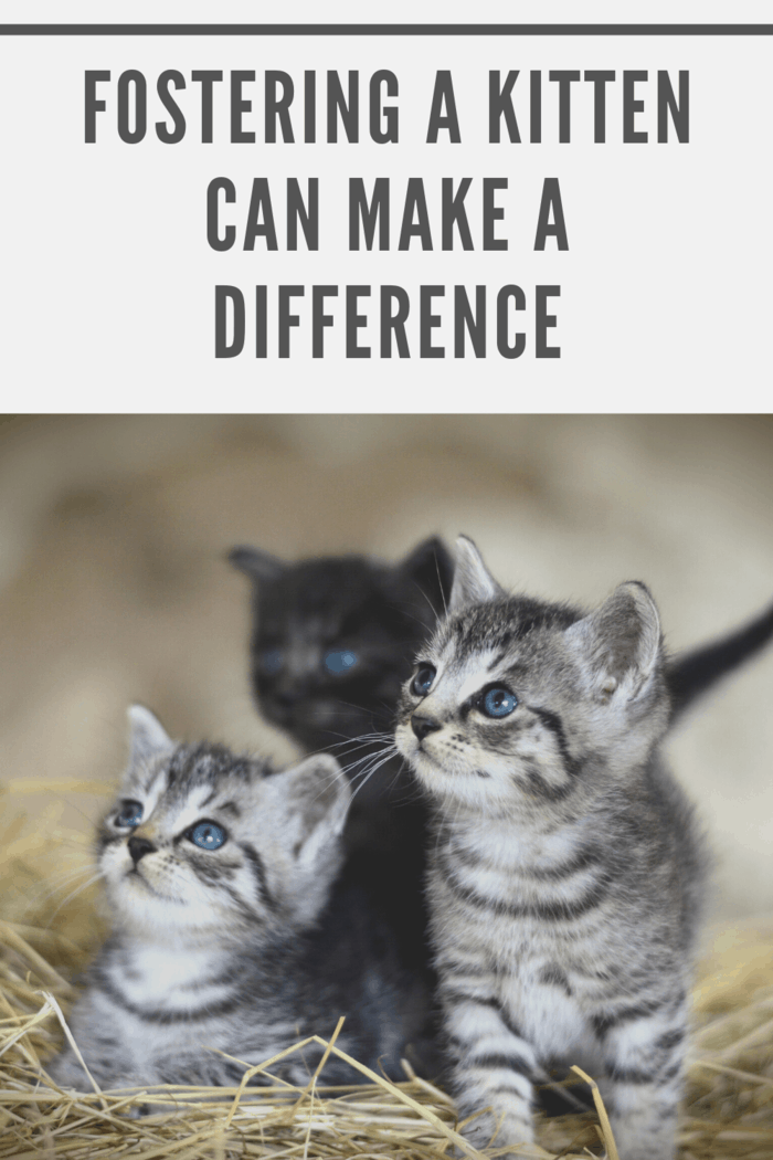 If you're not planning on adding another cat to your family of pets, fostering is a meaningful way to help with the rescuing of cats.