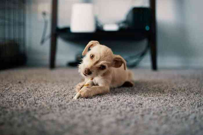 Pet-Friendly Carpet: How to Keep Your Carpet Clean When You Live with Pets