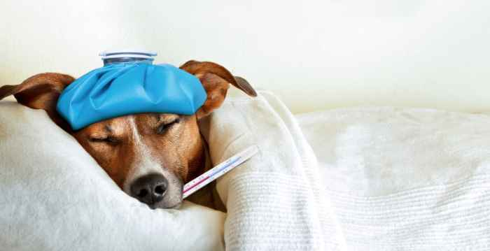Knowing the symptoms of bloat in dogs can help keep your dog in your family for years to come.