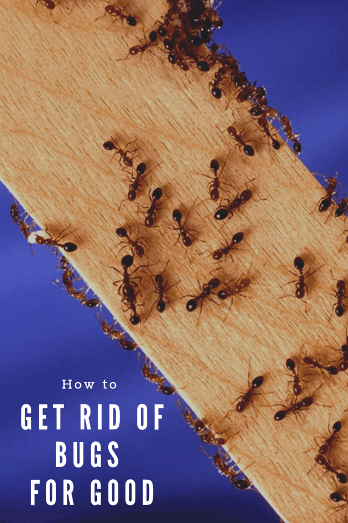 If you want to get rid of bugs for good in your home, these 7 proven methods will do the trick!