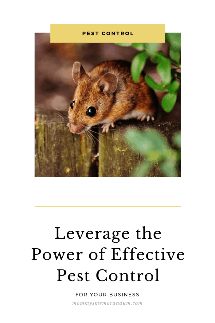 Learn how to leverage the power of effective pest control, a vital role in well-being and security, prosperity, and maintaining the standard of a business.