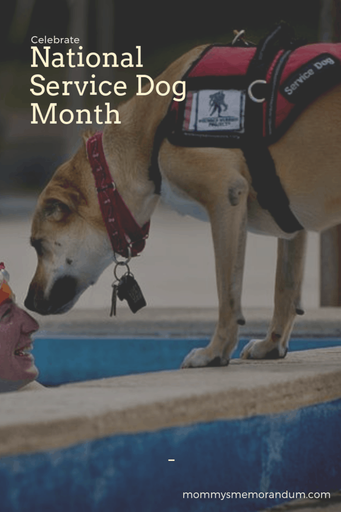 Help us celebrate and spread the word about service dogs and all the amazing things they do for us during National Service Dog Month in September!