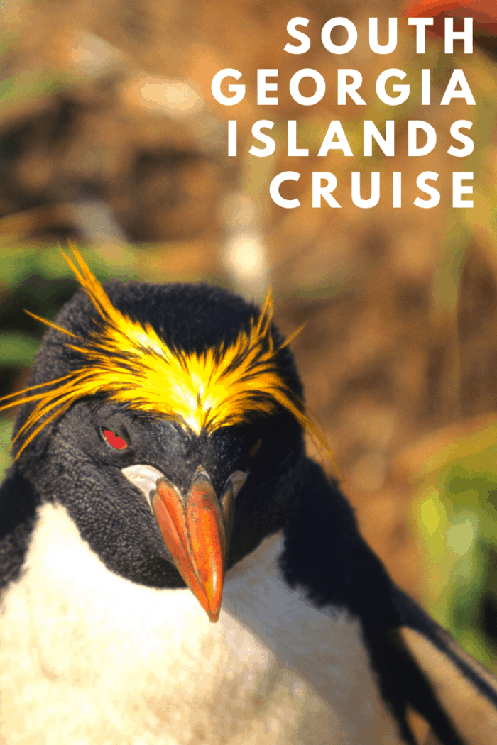 The largest population of penguins and seals in the world is located in the South Georgia Islands. Millions of penguins can be found around the island, and it's considered the most important place for penguins and seabirds breeding on the planet.