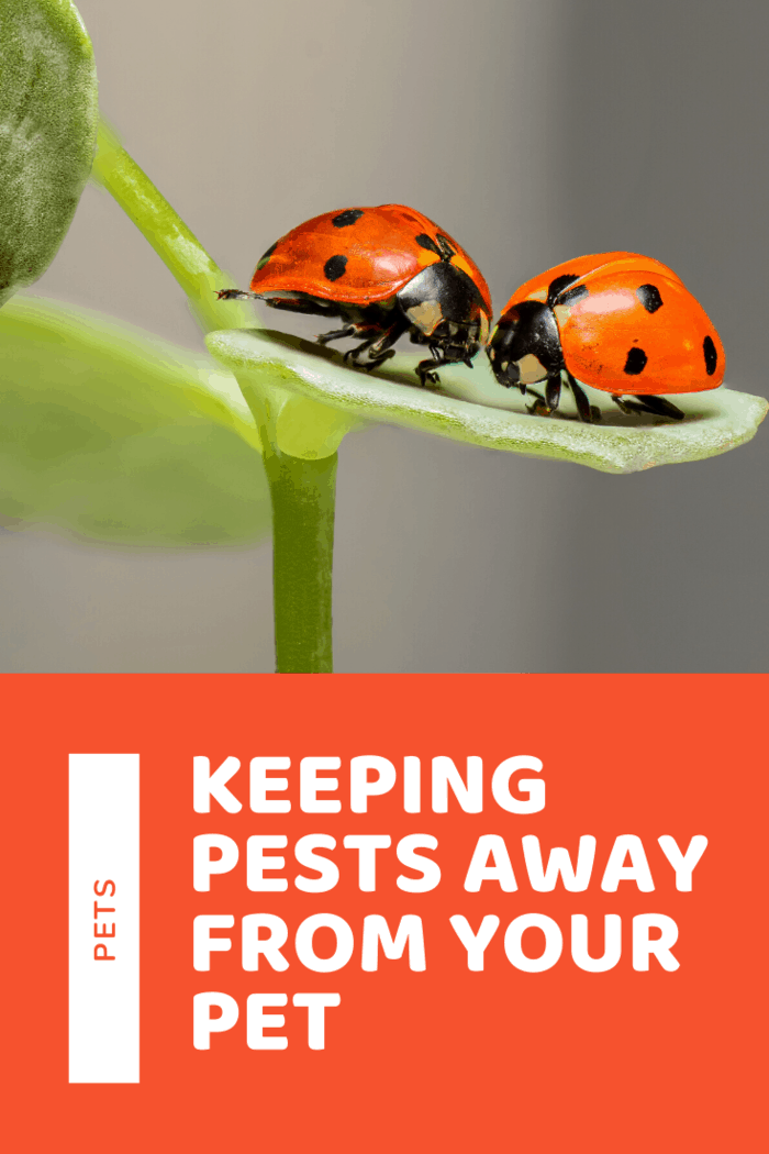 Ladybugs will eat mites and other insects and they will also feed on fleas and ticks that usually infest pets.