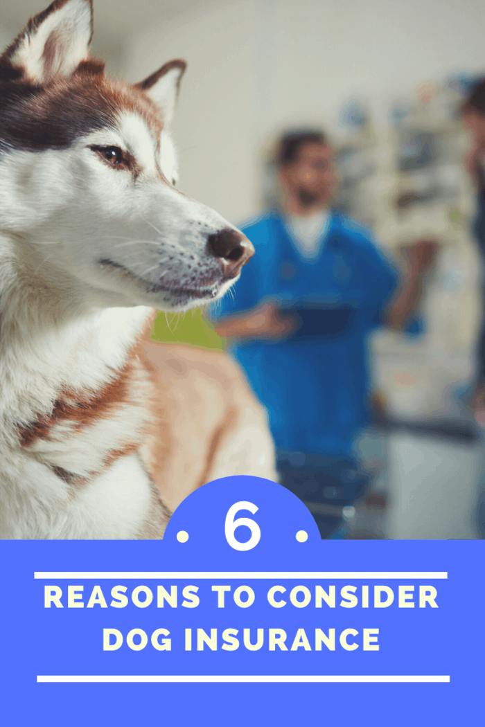 Other than feeding your pet well, spending quality time with him or her, and observing proper hygiene, you should also consider dog insurance.