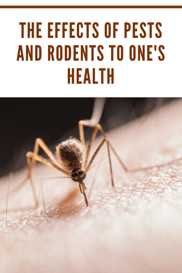 From mites to fleas, termites, and bedbugs, some of them bite, whereas others, such as bees, hornets, and wasps sting. Some forms of spiders even contain a type of venom whose antidote is rare to find. If not fatal, some of them could potentially leave you paralyzed.