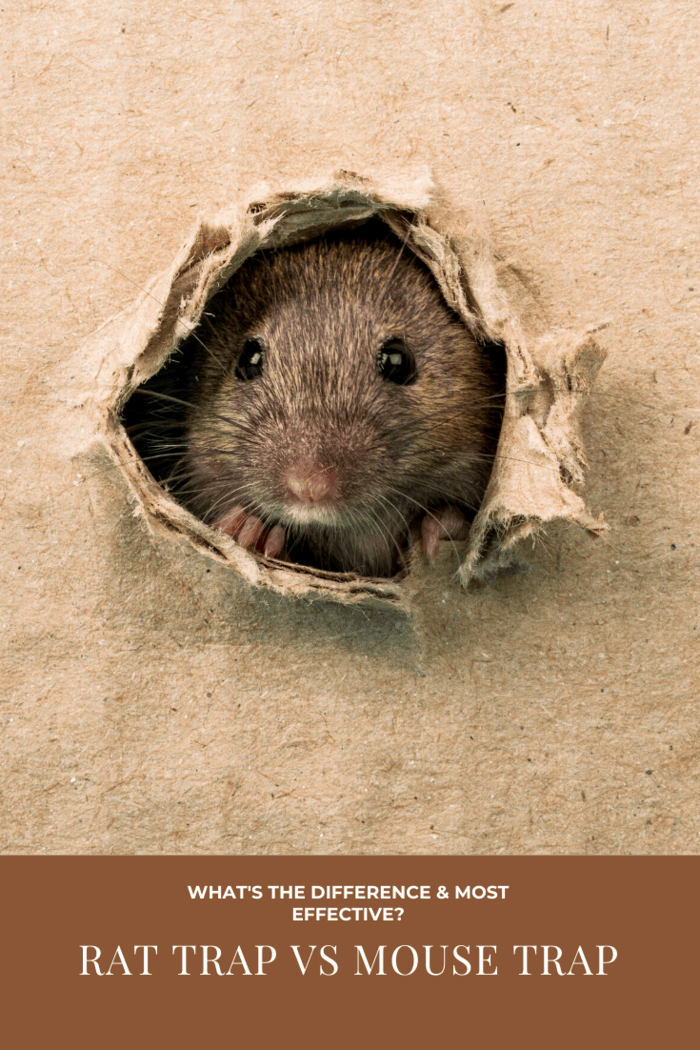 Here are more tips for you to catch the rodents successfully