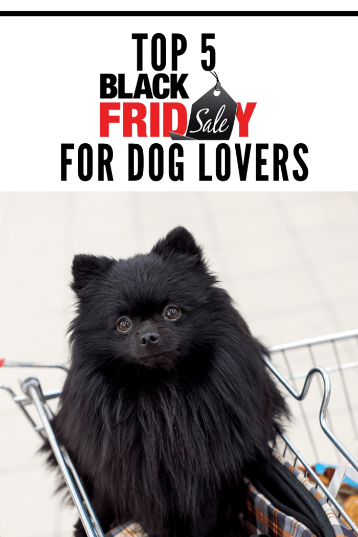 Top 5 Black Friday Deals for Dog Lovers