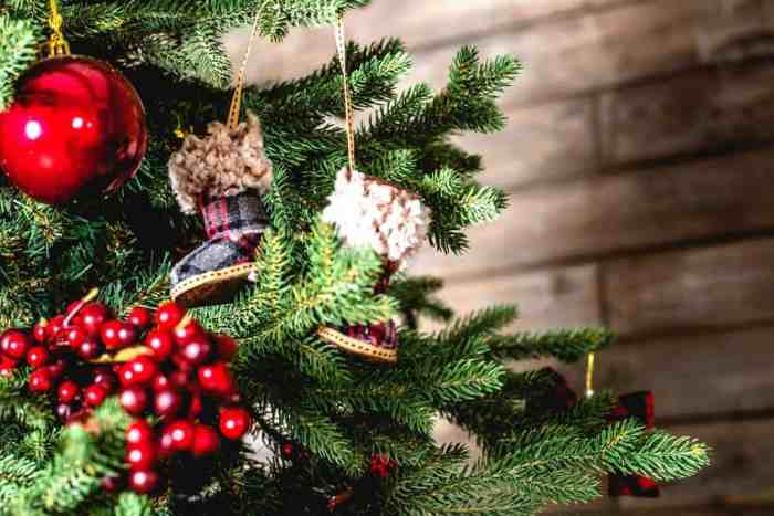 Selecting a real Christmas tree is always a highlight in festive season preparations. We discuss three types of real Christmas Trees and how to care for them.