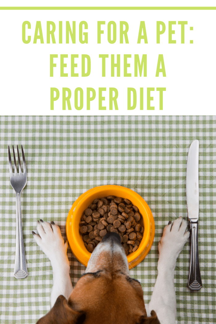 When it comes to taking care of your pet, the most important thing is to feed them healthy, nutrient-dense food.
