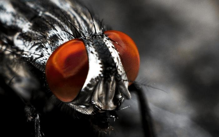 8 General Design Principles for Pest Prevention