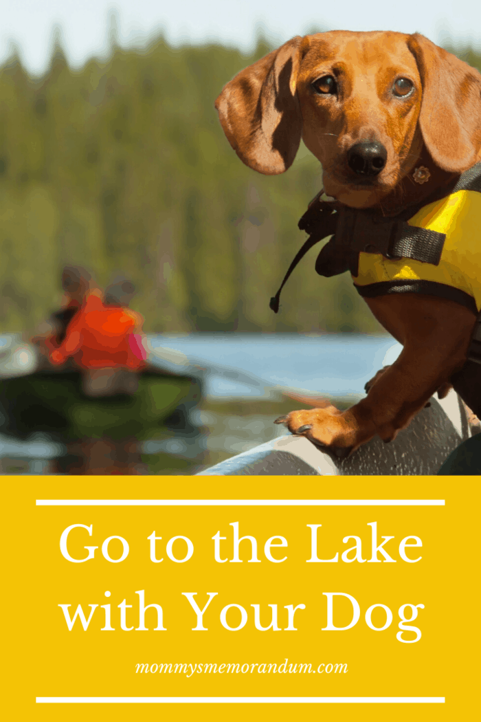 check online to see if the nearby lakes are dog-friendly