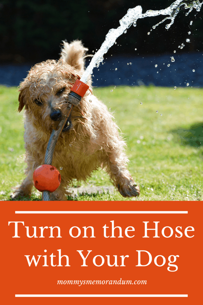 9 Fun Activities for Dogs  If your dog is more mermaid than a dog, a kiddie pool or sprinkler could mean an afternoon of fun.