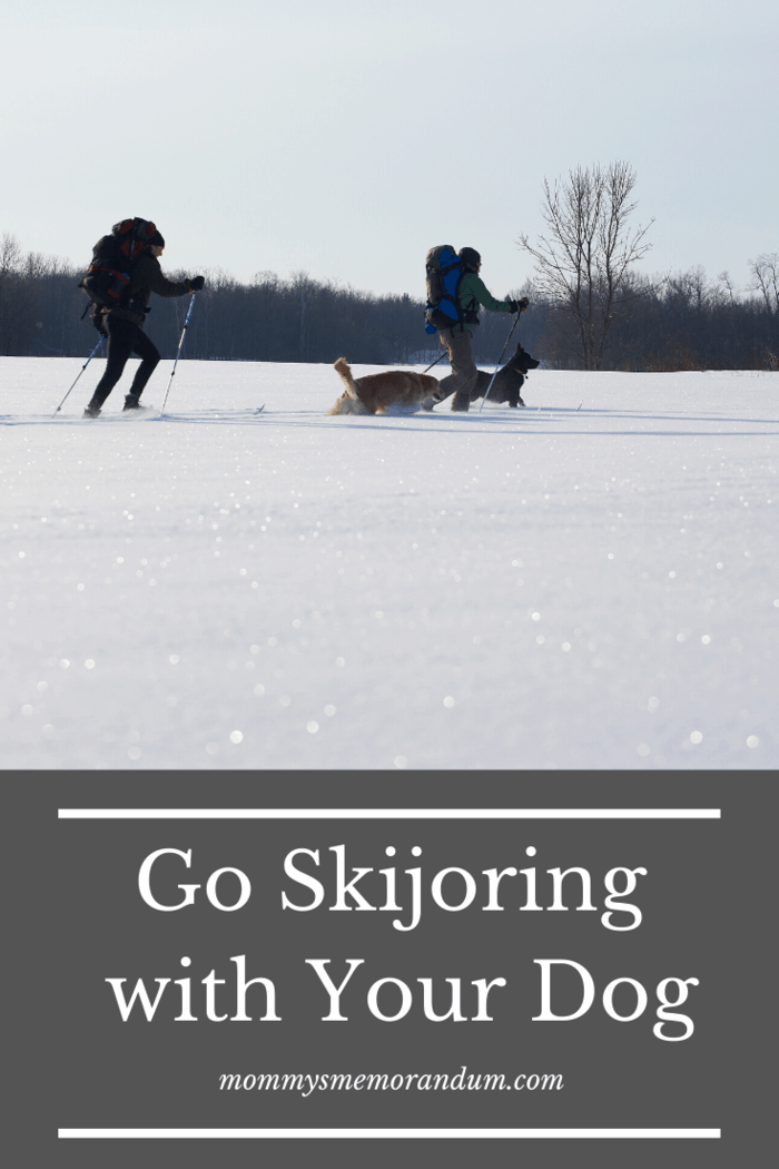 9 Fun Activities for Dogs Skijoring isa winter sport where a person on skis is pulled by an animal or vehicle.