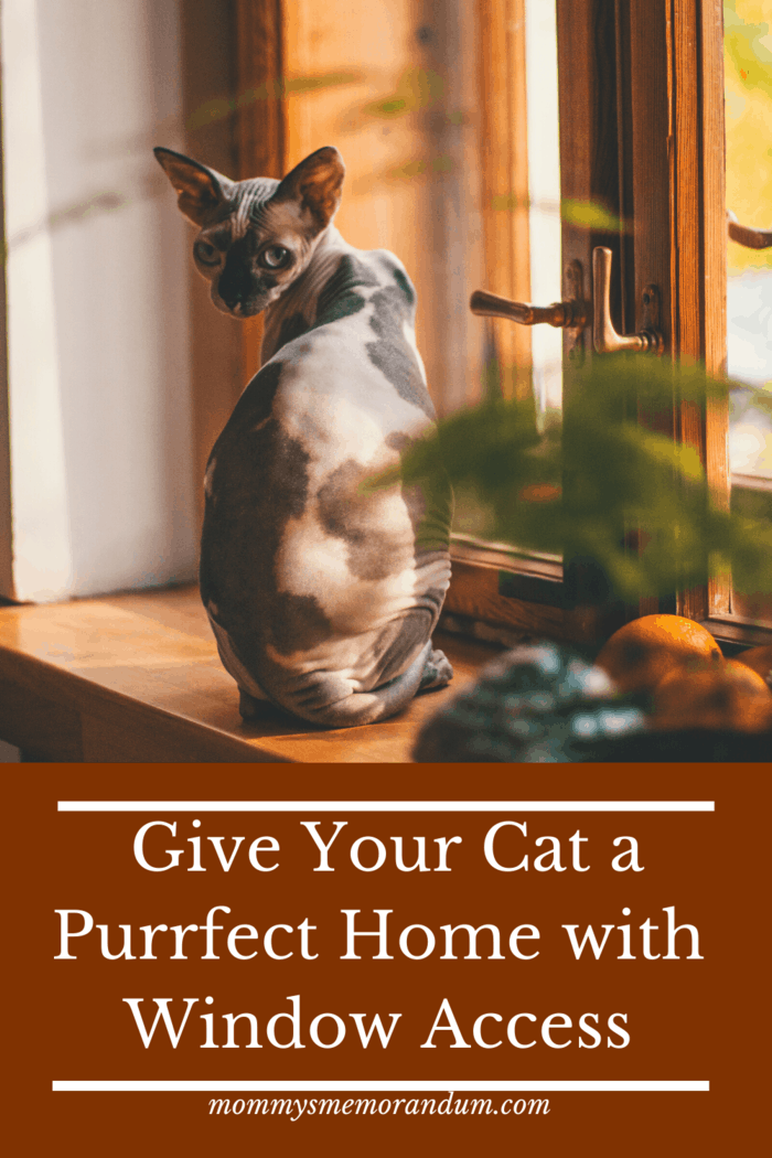 If your windows are lacking a big enough sill or perch for your cat, you can even just slide a chair or stool in front of it to give them their own spot to observe the world.