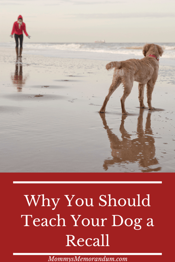 Train your dog to come back to you with a strong recall word.