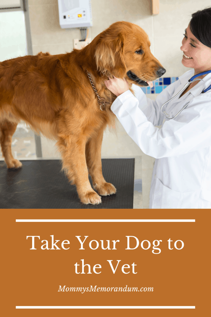 Dogs don't like going to the vet's, but just like in humans, checkups are important.
