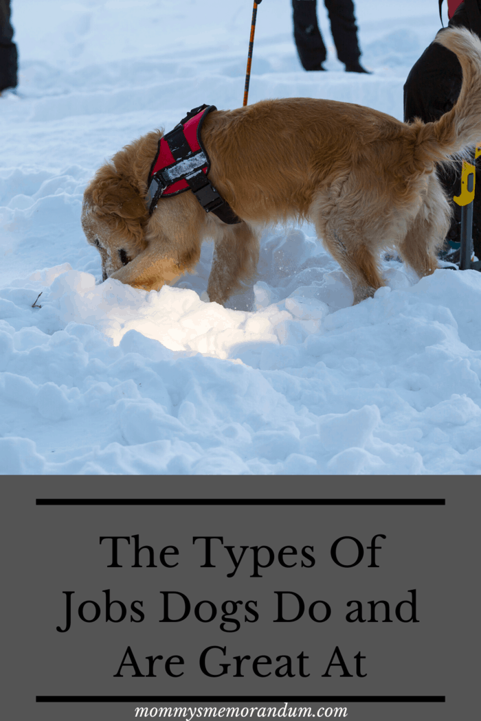 Pair a working dog's exceptional sense of smell and direction with their great agility and bravery, and you've got yourself a search and rescue dog (SAR).