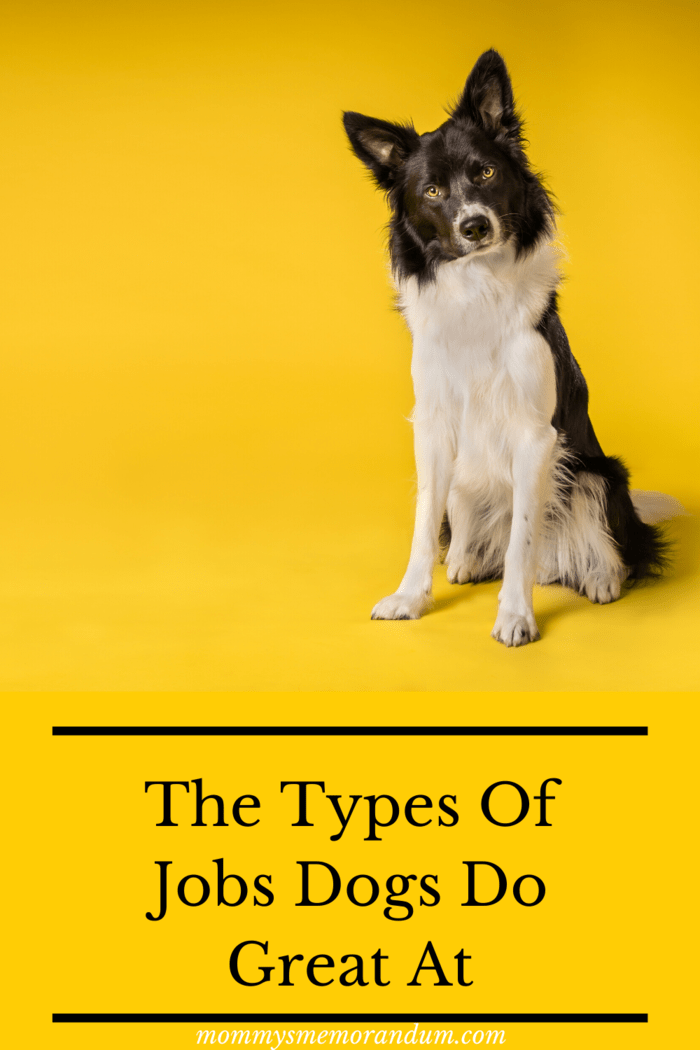 We all know that a dog is a man's best friend, but while dogs are generally known for the lifelong loyalty and companionship they offer, that's not all that they can do.