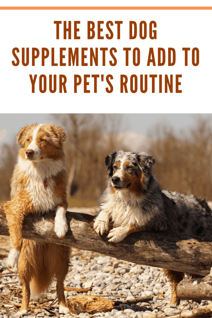 Another way you can be sure that your dog's supplements are of high-quality is by buying them from a known seller or reputable locations, such as the vet office.