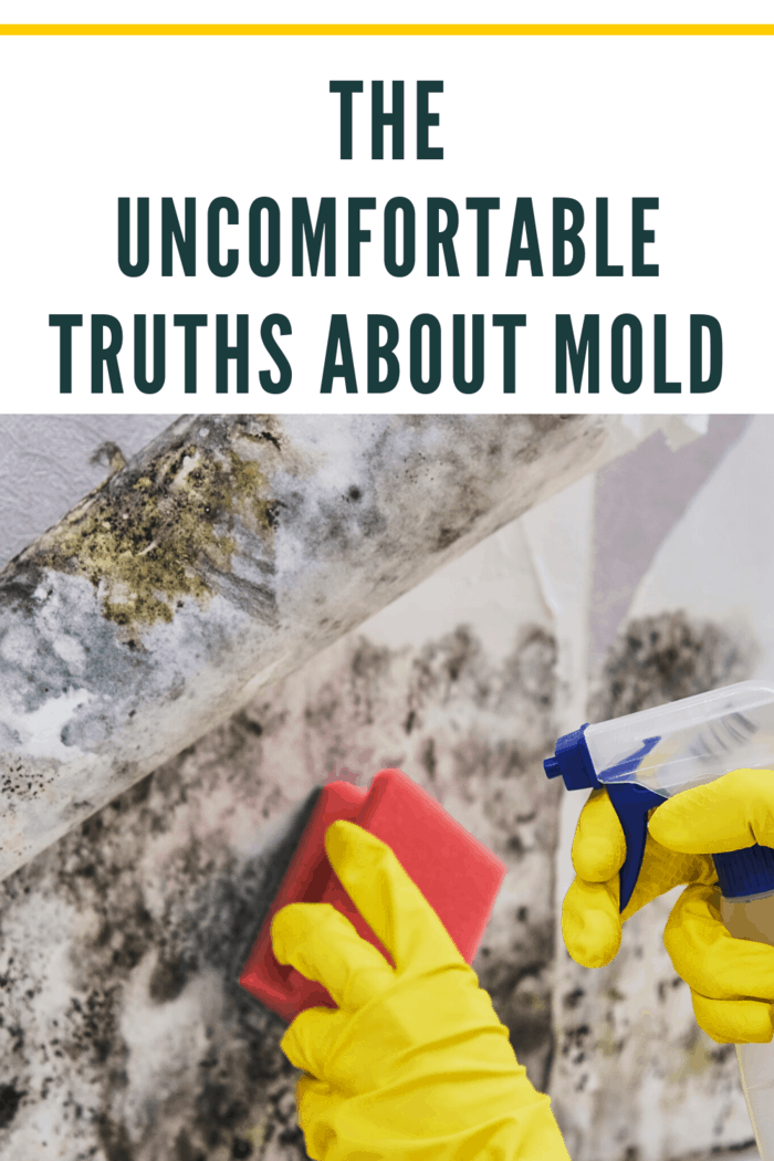 When should I consider getting a mold test and inspection?