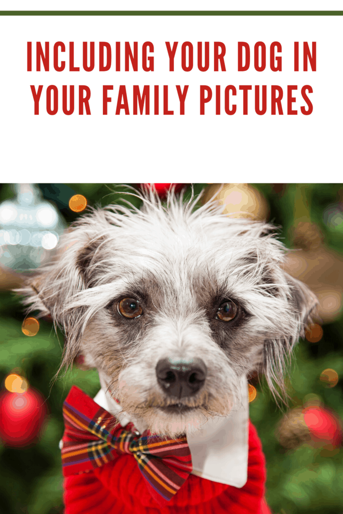 In addition to planning your outfit and how you'll present your family during your session, consider your dog as well.
