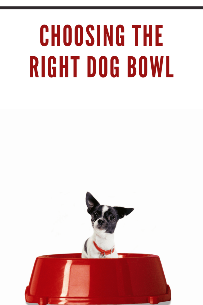 tiny chihuaua dog in giant red dog bowl