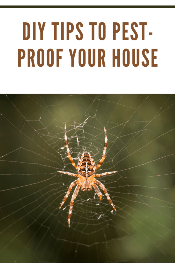 No individual is stranger to bugs infesting their home. These DIY tips to pest-proof your house will keep pests away.