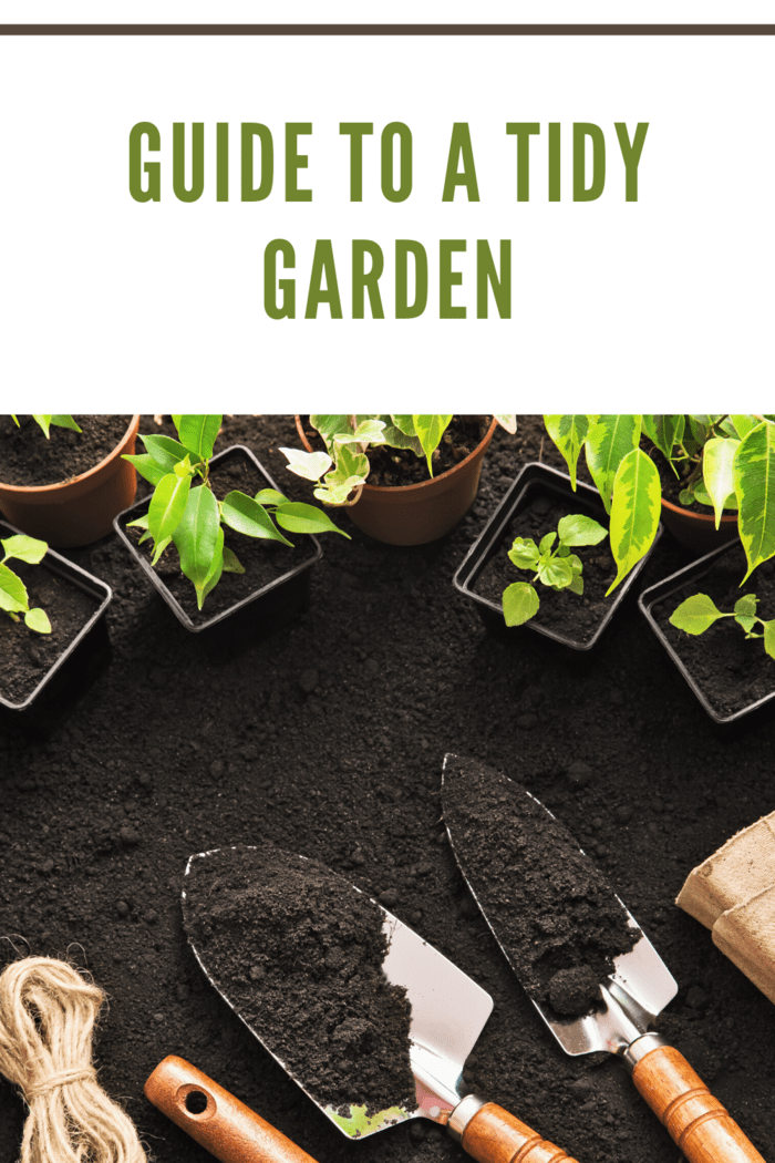 black soil with garden tools and small plants ready to plant