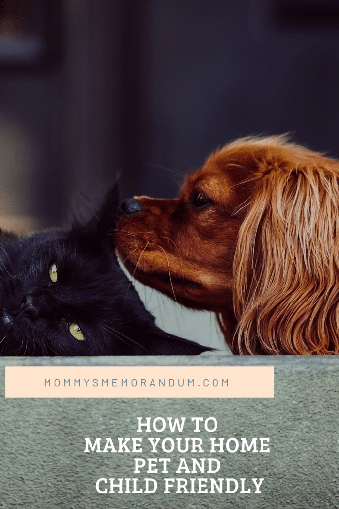 brown cocker spaniel on floor cuddling black cat