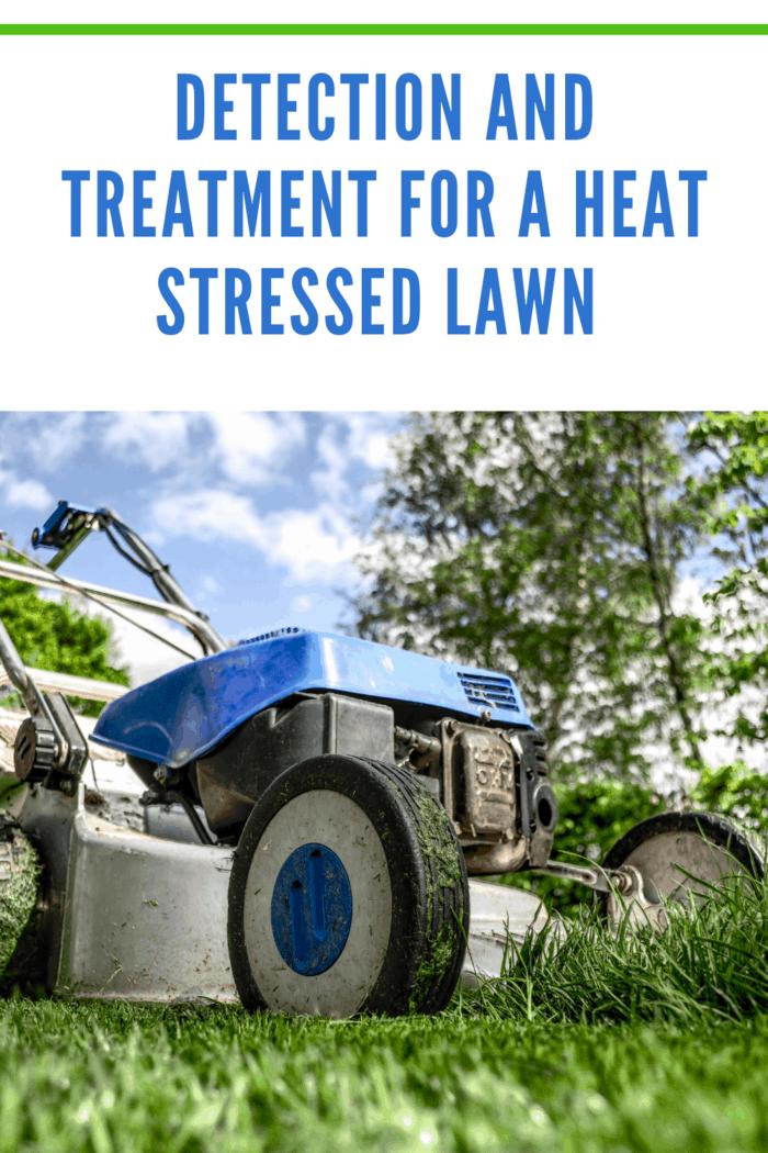 lawn mower on healthy lawn