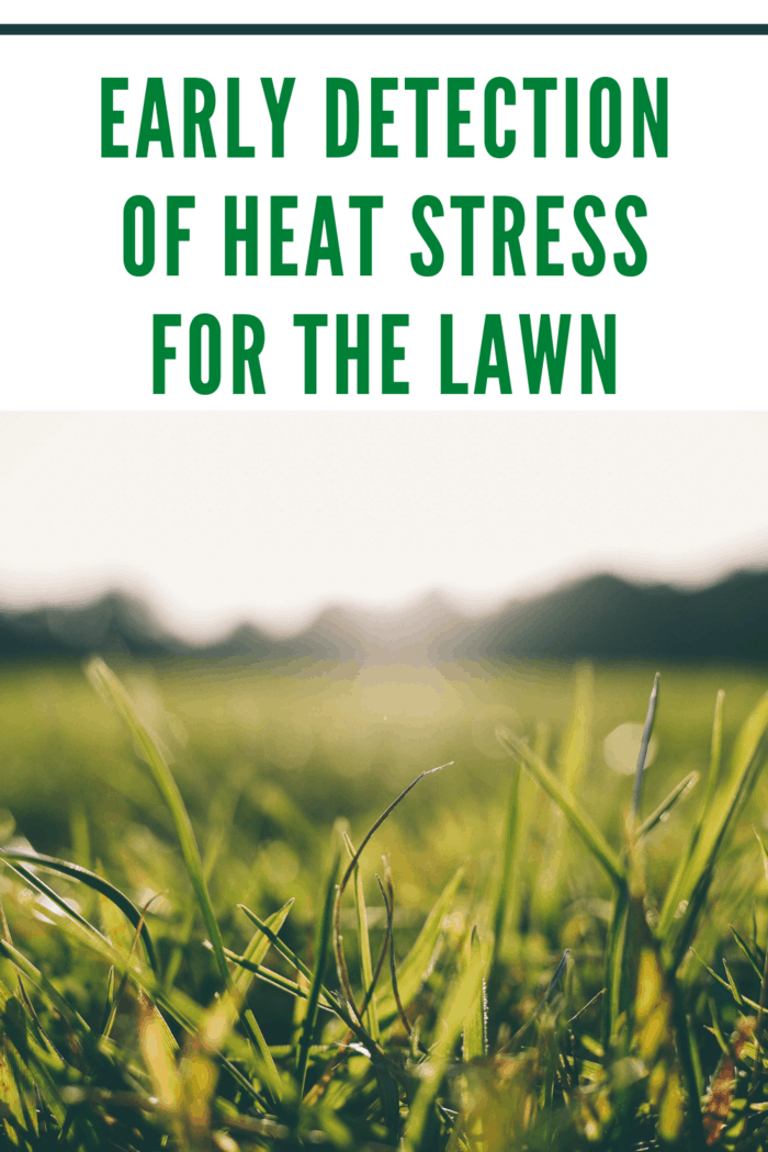 lawn up close as early detection of heat stressed lawn