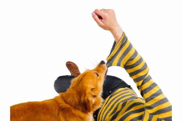 Dog biting womans sleeve