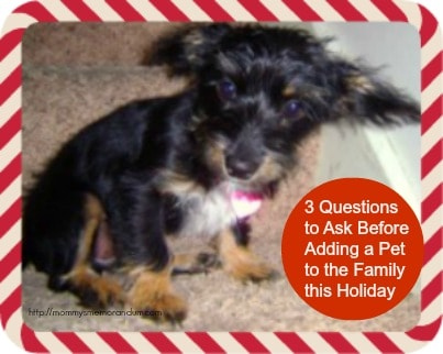 3 Questions to Ask Before Adding a Pet to the Family this Holiday #Holiday #Pet #Petco
