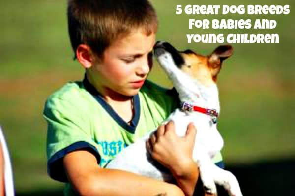 5 Great Dog Breeds for Babies and Young Children