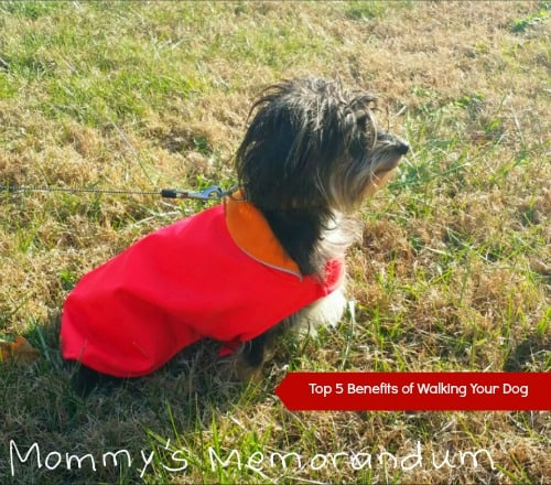 Top Five Benefits of Walking Your Dog: