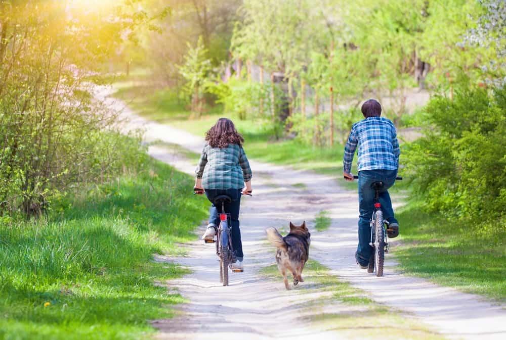 Dog Biking Tips