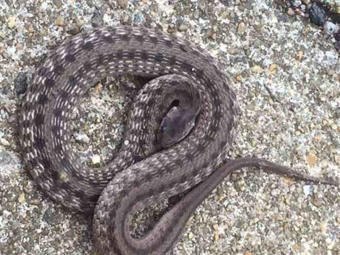 Snake Safety and Your Child: Lifetime Lessons for Preventing Poisonous Problems