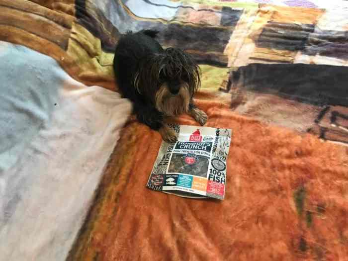 Bailey Mae with Hundur's Crunch Dog Treats