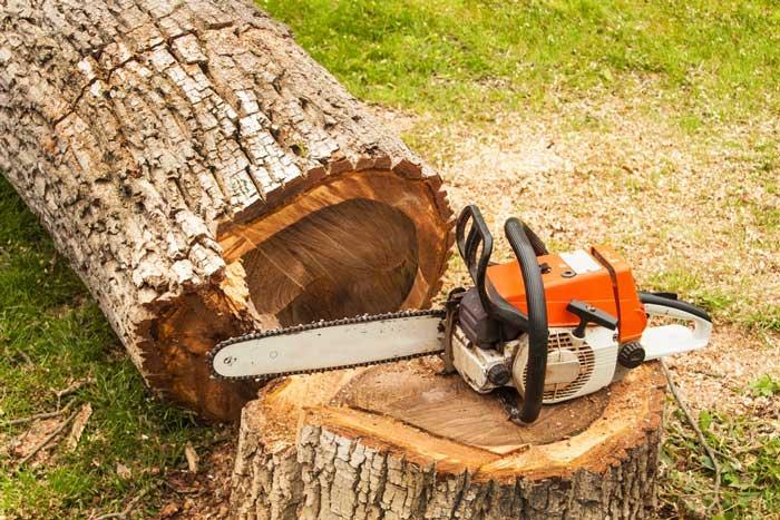 Professional-chainsaw-is-on-walnut-tree