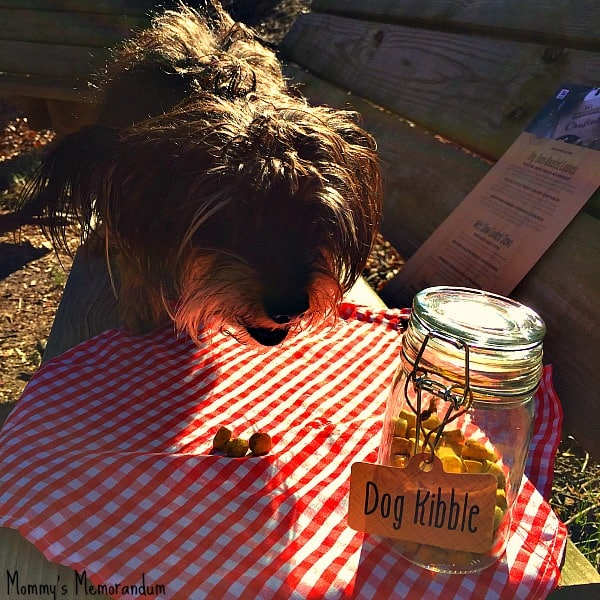 bailey mae eating at the park-hill's crafted dog food review