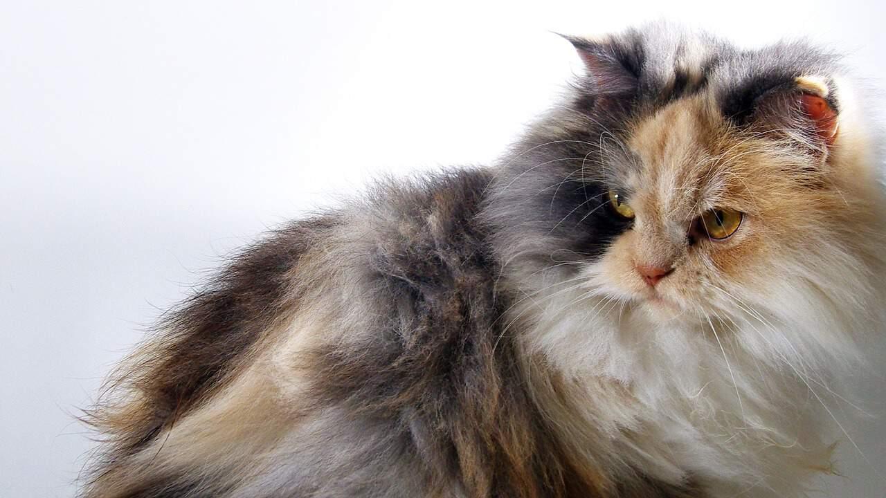 best pet for your zodiac