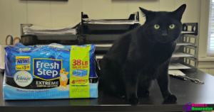 Jinx Tried @FreshStep Compact Pack Cat Litter for a Fresher Box #FreshStepCompactPack #ad