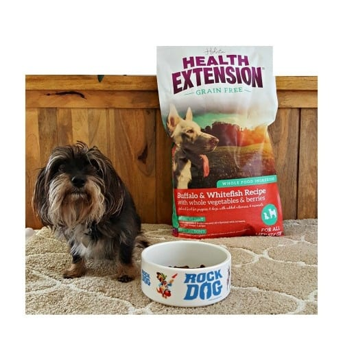 health extension dog food with bailey mae