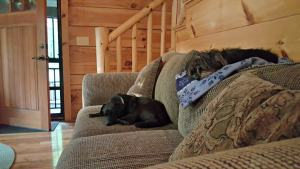Home-cleaning Tips for Households with Pets