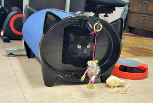 Save Furniture and Let Your Cat Rest in Comfort with ScratchKabin