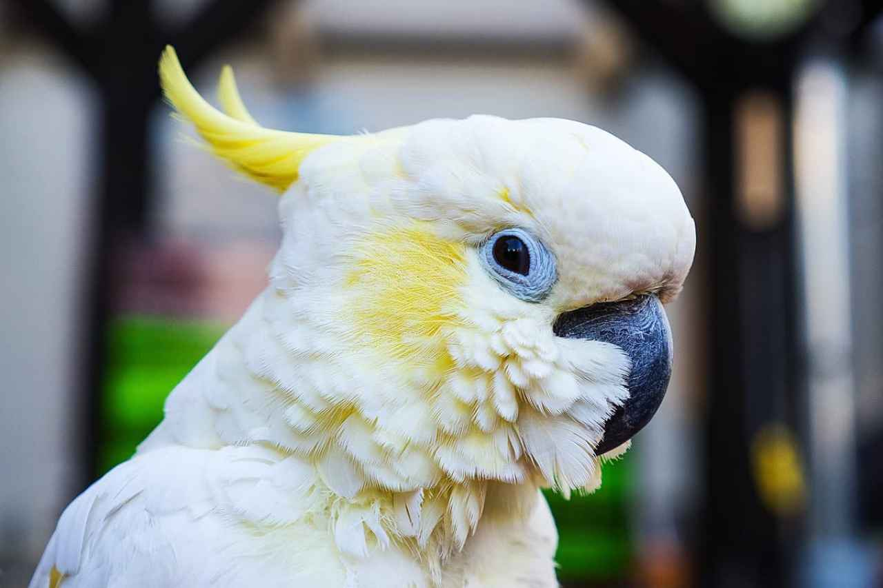 best pet for your zodiac sign