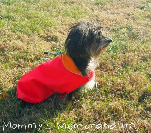 pet overcoat #review