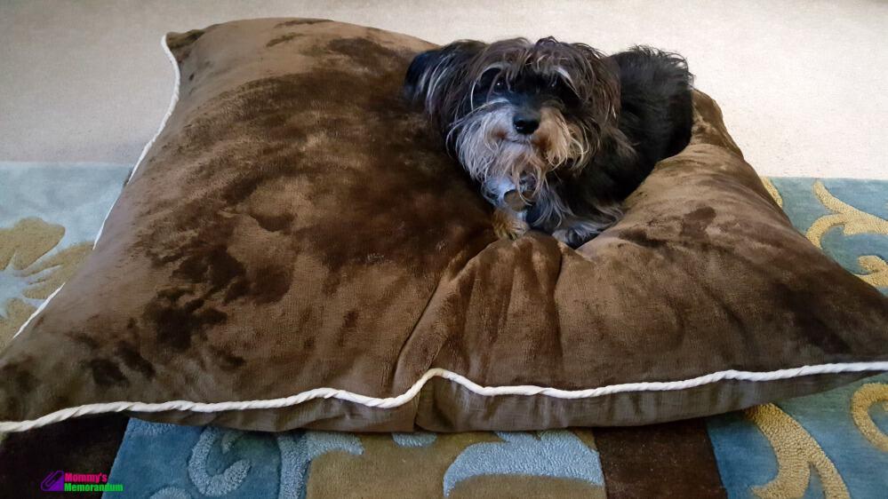 Popular PetMateProducts Aspen Pet Luxe Velvet Bedding Collection