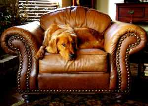 8 Ways to Reduce Your Dogs Stress While Home Alone